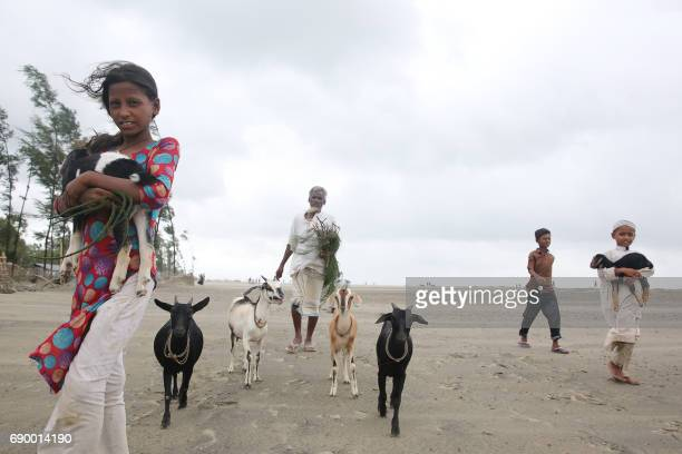 Bangladeshi villagers and their livestock evacuate to a storm shelter on the coast in Cox's Bazar district on May 30 2017 Cyclone Mora hit Bangladesh...