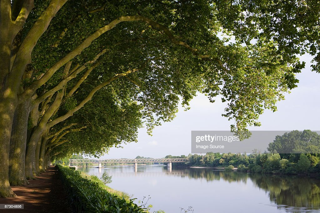 Bank of river vienne in chinon