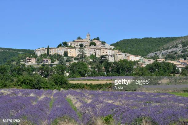 Banon Field of lavender in blossom in front of the village set high up on a site overhanging the Coulon Valley and blue sky in the background