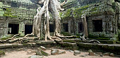 Giant Tree Root At Ta Prohm Near Angkor Wat, Cambodia