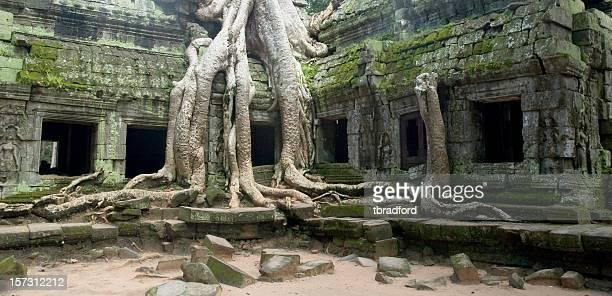 Banyan Tree Roots At Ta Prohm Temple, Angkor Wat, Cambodia