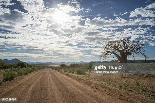 Baobab and empty gravel road