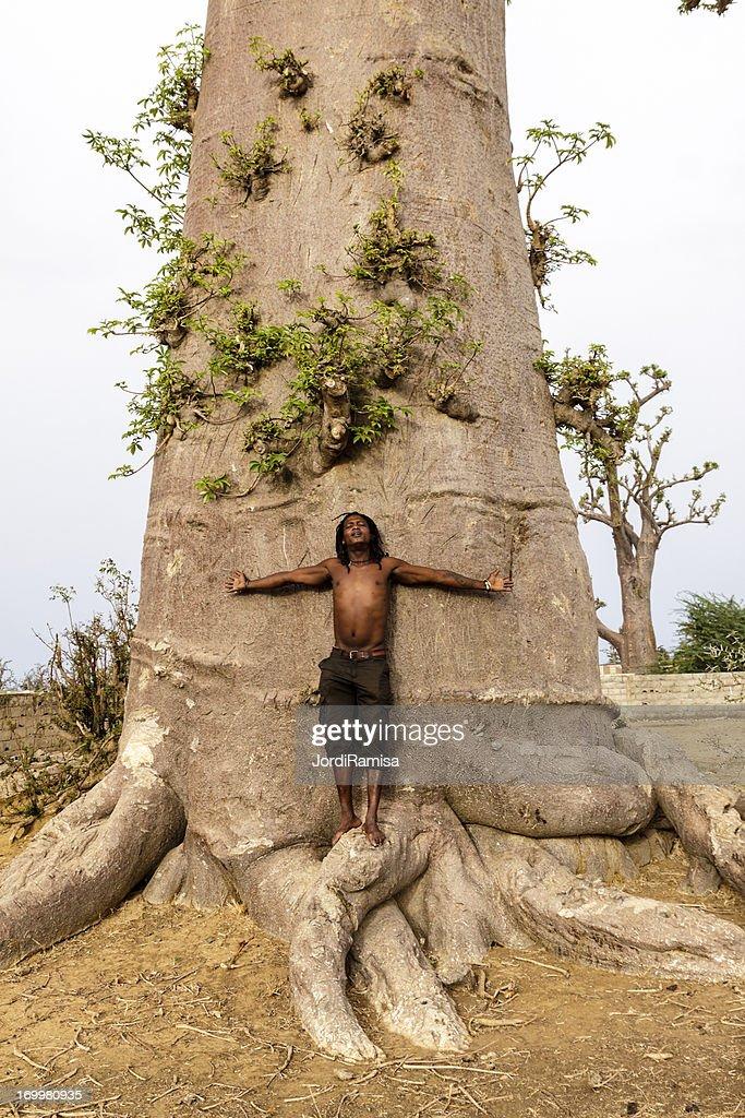 Baobab : Stock Photo