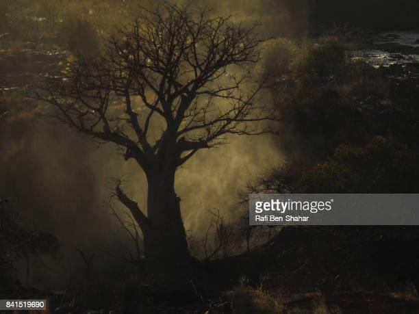 Baobab tree in Epupa falls