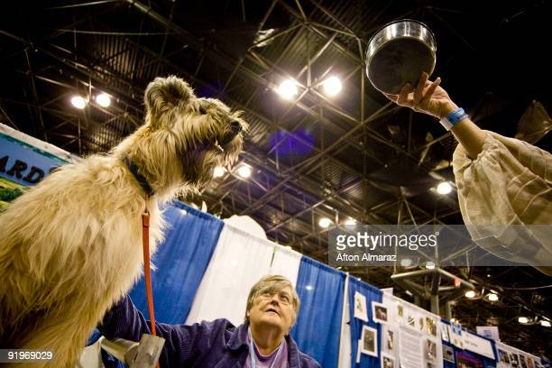 Barbara Lynch watches as her Briard named Querida reaches for food during the 'Meet The Breeds' show at the Jacob Javits Convention Center October 17...