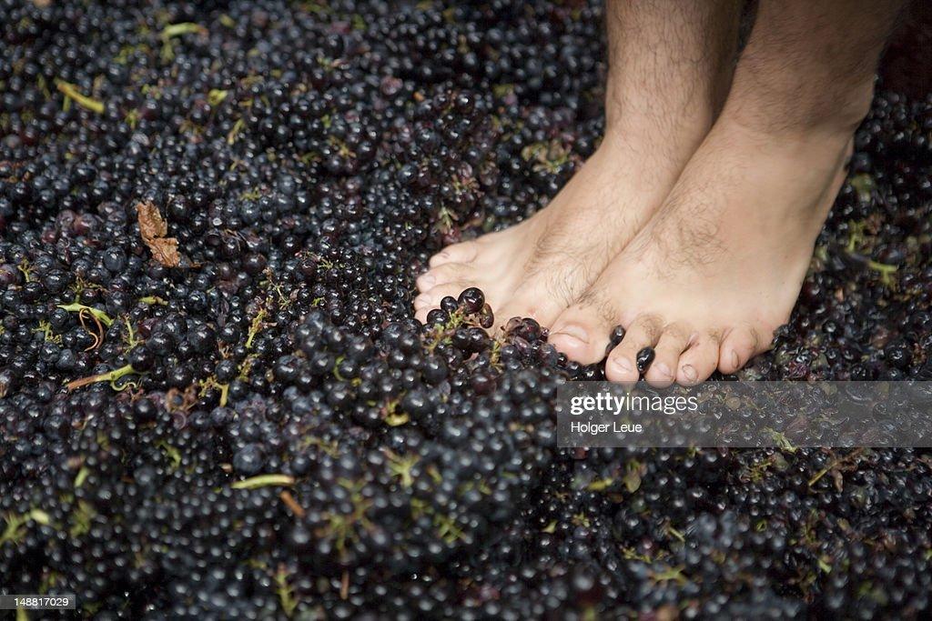 Bare feet crushing grapes at Madeira Wine Festival. : Stock Photo