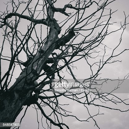 Bare Tree Against Cloudy Sky