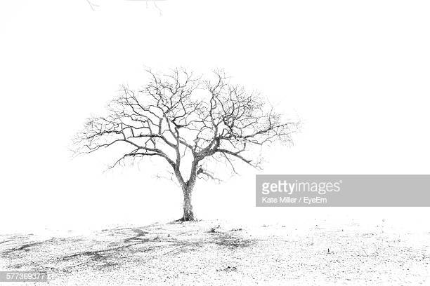 Bare Tree Against Sky On Field