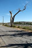 Bare Tree at Mono Lake California State USA