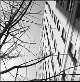 Bare tree branches and a sunlit building in New York