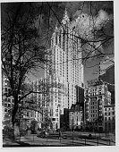 Bare tree branches are silhouetted against the sunlit New York Life Insurance Company building as seen from Madison Square   View from Madison Square...
