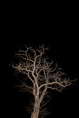 Bare tree by night