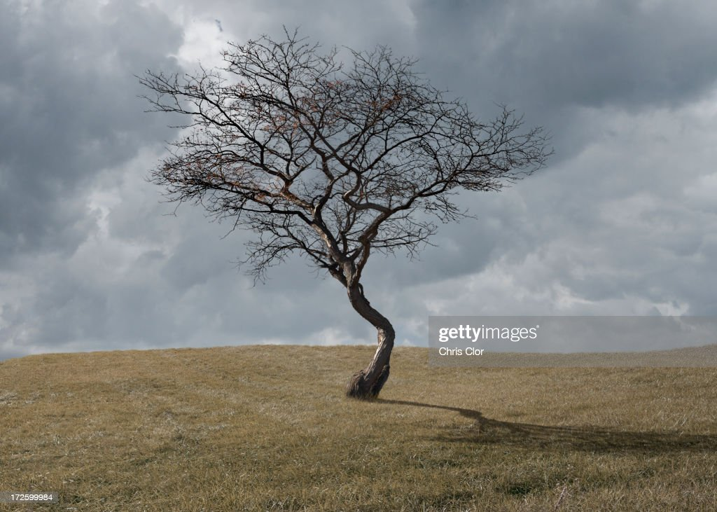 Bare tree growing in rural landscape : Stock Photo