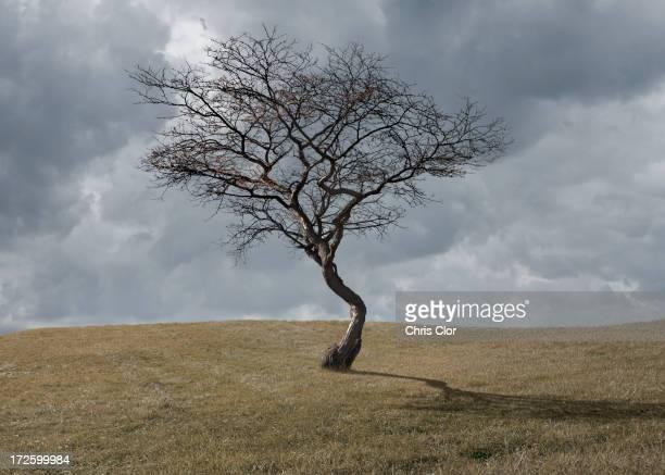 Bare tree growing in rural landscape