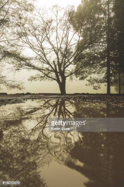 Bare tree in the fog with reflection