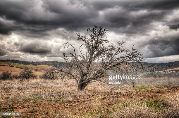 Bare Tree on a Stormy Day (HDR)