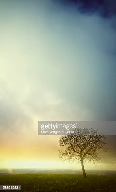 Bare Tree On Field Against Sky At Morning