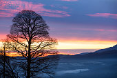 A bare tree on the slopes of Wansfell at sunset near Ambleside, Lake District, UK.