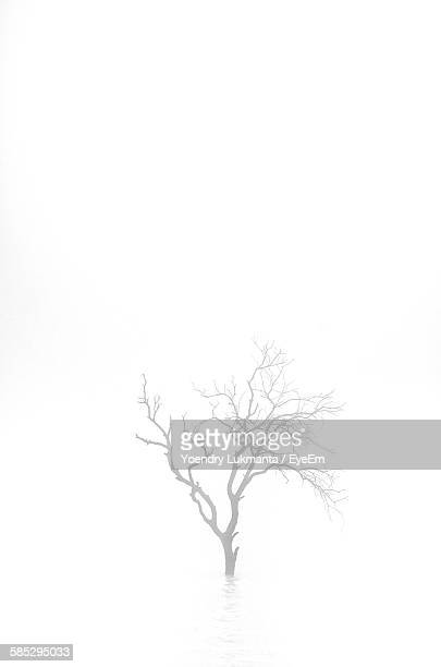 Bare Tree On Water In Foggy Weather Against Sky