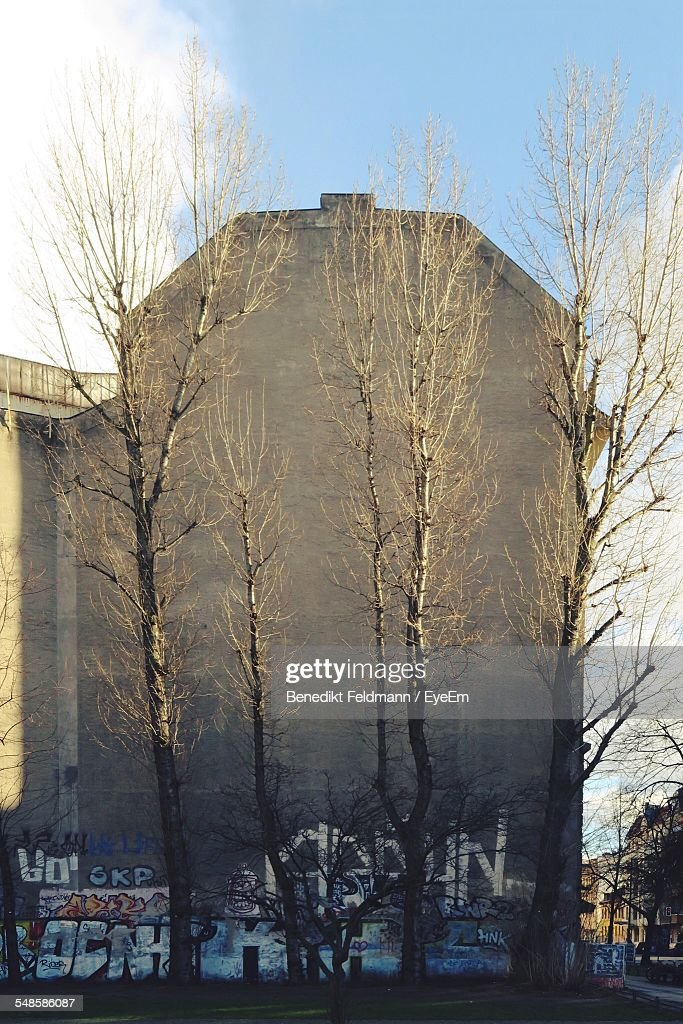 Bare Trees Against Building With Graffiti
