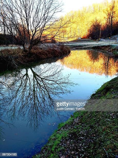 Bare Trees By Canal At Forest