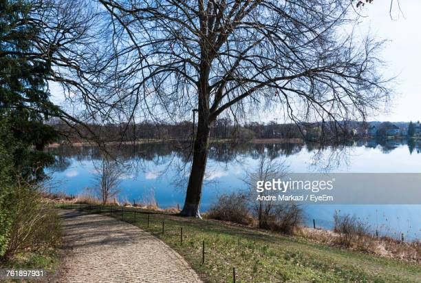 Bare Trees By Lake Against Clear Sky