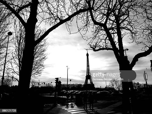 Bare Trees By Road Against Eiffel Tower During Sunny Day