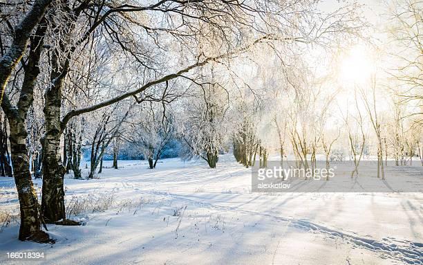 Paysage d'hiver ensoleillé