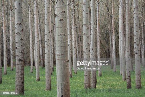 Bare trees in field : Foto de stock