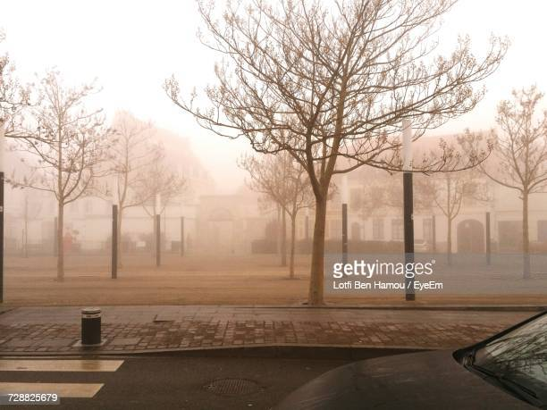 Bare Trees In Foggy Weather Against Sky During Winter