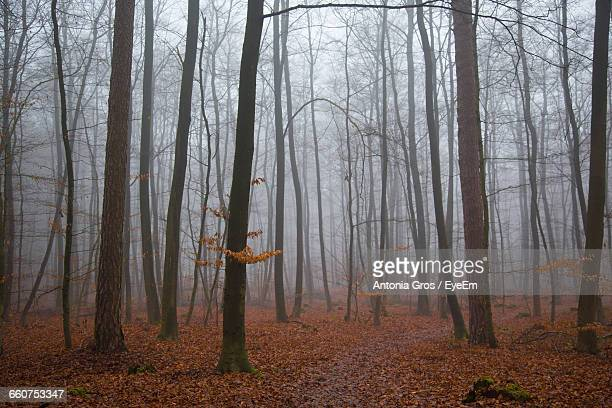 Bare Trees In Foggy Weather During Autumn