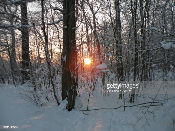 Bare Trees In Forest During Sunset