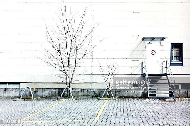 Bare Trees In Front Of Warehouse