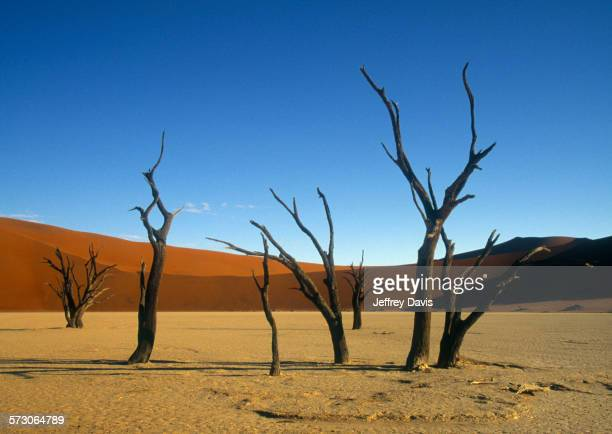 Bare trees in remote desert