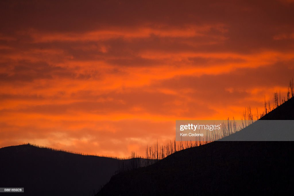 Bare trees leftover from the fire in 2003 are seen here at sunset in Glacier National Park Oct 17 2013 Started by lightening on July 18 in the...