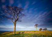 Bare trees on a grassy plain in south west England taken on December 10 2011