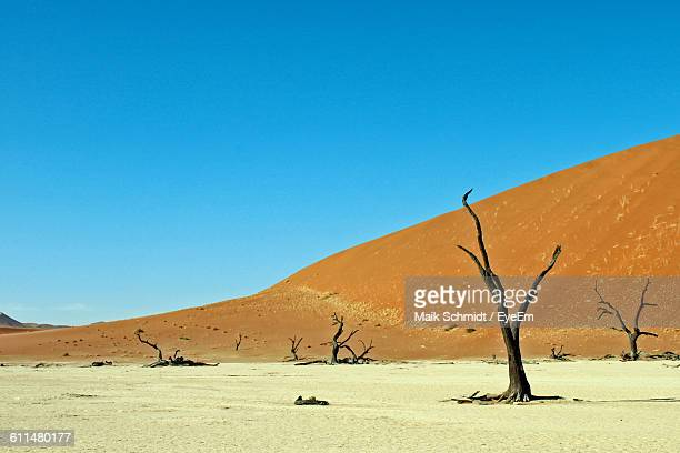 Bare Trees On Field By Mountain Against Blue Sky