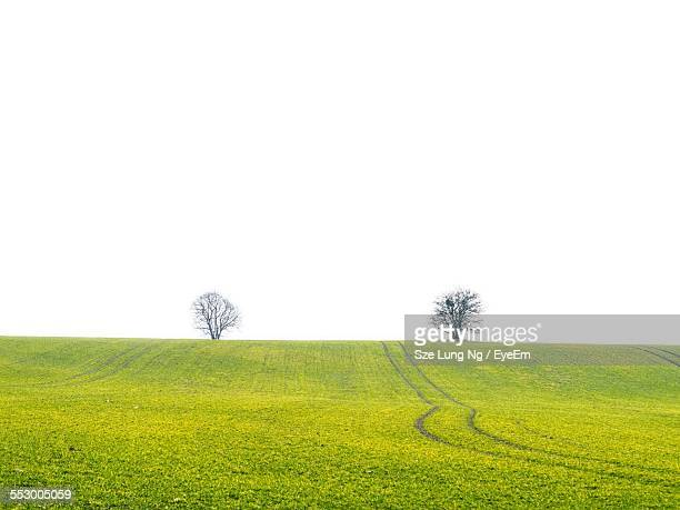 Bare Trees On Grassy Field