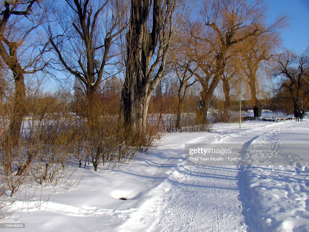 Bare Trees On Snow Covered Landscape : Stock-Foto