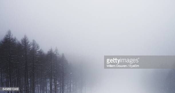 Bare Trees On Snowcapped Landscape In Foggy Weather During Winter