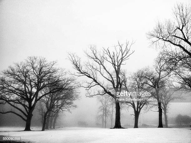 Bare Trees On Snowy Field Against Sky During Foggy Weather