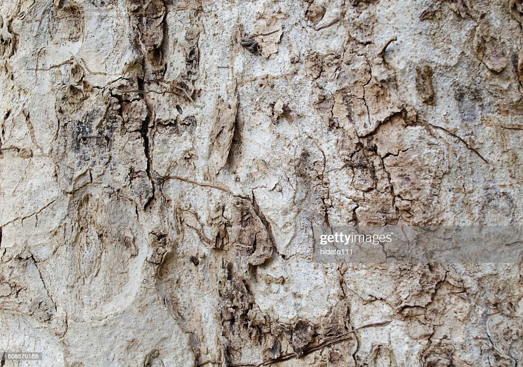 Bark background : Stock Photo