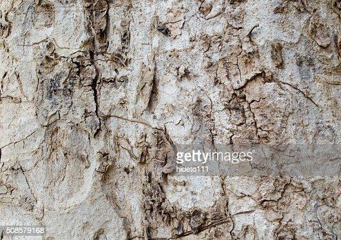 Bark background : Stock Photo