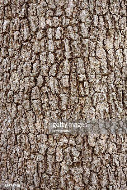 Bark background, tree in a rain forest.