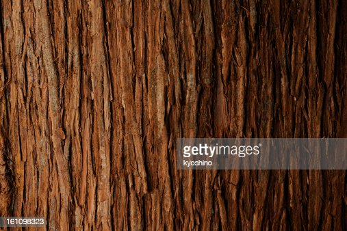 Bark of cedar tree texture background