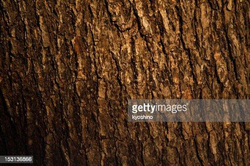 Bark of pine tree texture background