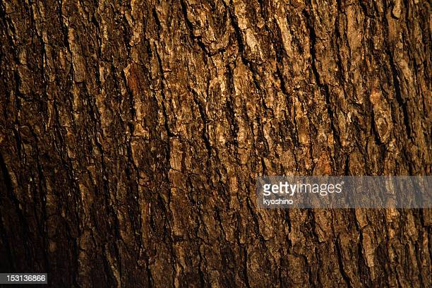 Bark of pine tree texture background