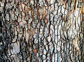 A bark of plane tree as a background.