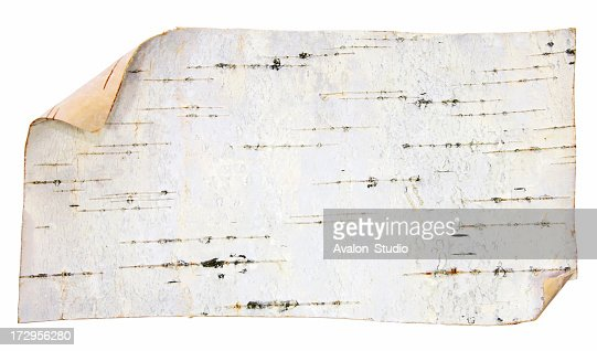 Bark of the birch on a white background