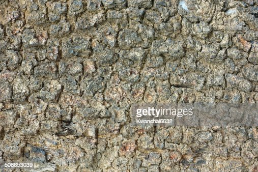 Bark Wood background : Stock Photo
